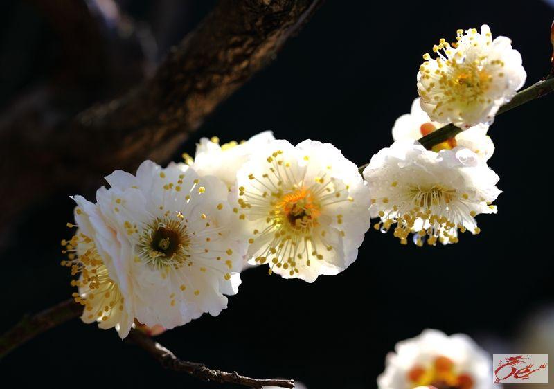方华敏:南京二月春
